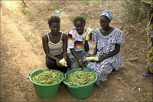 Agriculture in Senegal - Cowpea vendors near Thies, Senegal.