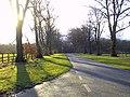 Cowthwaite Plantation - geograph.org.uk - 319147.jpg