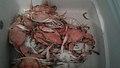 Crabs-καβούρια.jpg