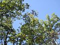 Craighead Forest Park 2011-10-02 Jonesboro AR 008.jpg