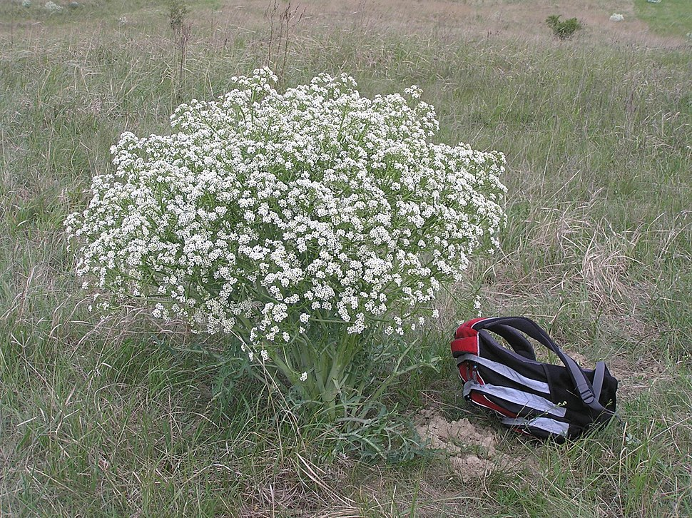 Дорогие, цветы волгоградской области названиями