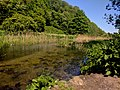 Creswell Gorge, Creswell Craggs, Notts (70).jpg