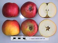 Cross section of Pomme d'Amour, National Fruit Collection (acc. 1947-137).jpg