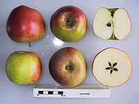 Cross section of Redwing, National Fruit Collection (acc. 1978-219).jpg
