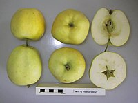 Cross section of White Transparent, National Fruit Collection (acc. 2000-096).jpg