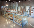Crypta Balbi, vitrine with finds from the antiquity-2.jpg