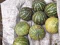 Cucumis trigonus-2-market-yercaud-salem-India.JPG