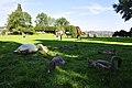 Cygnus olor - Arboretum 2010-09-03 17-06-28.JPG