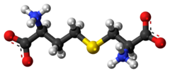 Ball-and-stick model of the cystathionine molecule as a zwitterion