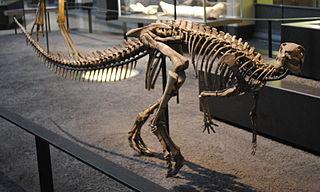 <i>Dysalotosaurus</i> genus of reptiles (fossil)