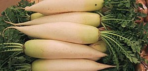 Picture of a pile of Daikon (giant white radis...