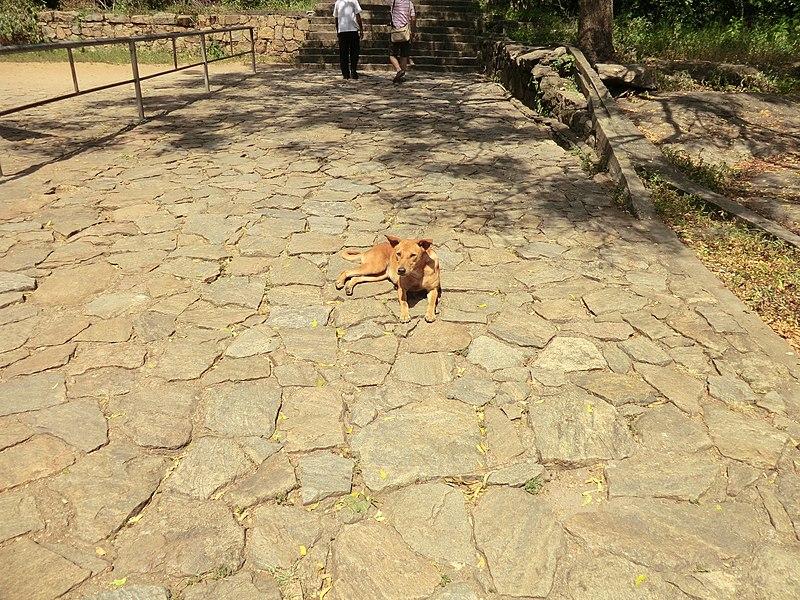 File:Dambulla, Sri Lanka - panoramio (141).jpg