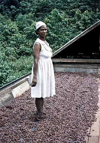 """Cocoa bean - """"Dancing the cocoa"""", El Cidros, Trinidad, c. 1957"""