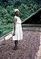 Dancing The Cocoa, McBride's estate, El Cidros, Trinidad c. 1957.jpg