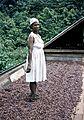 Dancing The Cocoa, McBride's estate, El Cidros, Trinidad c. 1957.jpg