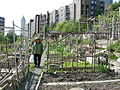 Danny Woo Community Garden 08.jpg
