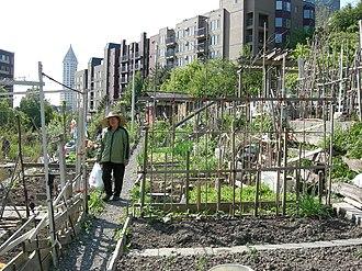 Kobe Terrace (Seattle) - Danny Woo Garden
