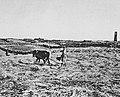 Daraa Grain Threshing, 1906 by B Moritz Cropped.jpg
