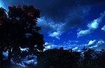 Dark Nature 3.jpg