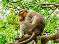 Daulatabad, Aurangabad - panoramio (41).jpg