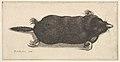 Dead Mole MET DP823967.jpg