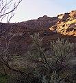 Deschutes Wild and Scenic River -- Beavertail (26029426572).jpg