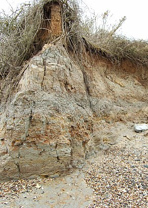 London Clay - Eroding London Clay cliffs at The Naze in Essex.