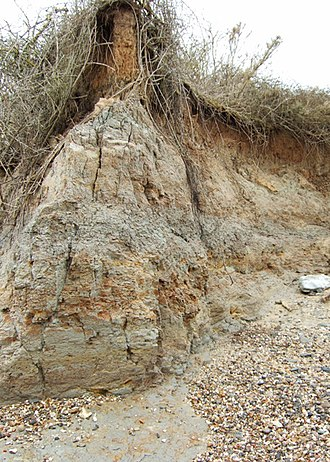 London Clay - Eroding London Clay cliffs at The Naze in Essex