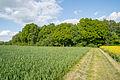 Detmold - 2015-05-21 - LIP-087 Oetternbach (17).jpg