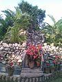 Digha Amravati Park potted Plants 2.jpg