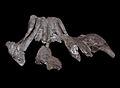Dinosauria indet hateg (16685590802).jpg
