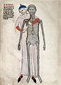 Dissection; 14th century Wellcome L0023654.jpg