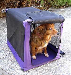 Crate training - A dog in a soft crate.