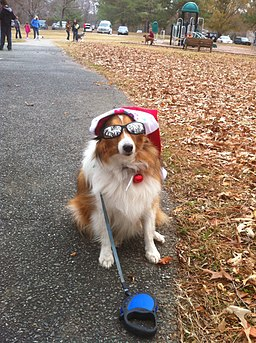 DogWithHatGlasses (8243552527) (2) turn your pet into an instagram star