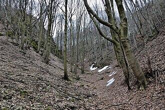 Draw (terrain) - Typical draw, Little Carpathians