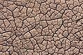 Dry Cracked Mud (4957b8b2-f52c-43b0-acc2-ead42cf6f03b).jpg