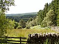 Dry stone walled field in Kielder Forest and beyond - geograph.org.uk - 1442463.jpg