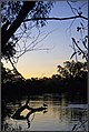 Dusk and duck, Noreuil Park Foreshore with the Murray River. Peter Neaum. - panoramio.jpg