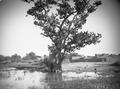 ETH-BIB-Gao, prächtige Sykomoren umrahmen die Ufer des Nigers-Tschadseeflug 1930-31-LBS MH02-08-0498.tif