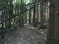 Eastern section of Trevor Hall Wood - geograph.org.uk - 919572.jpg
