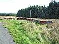 Edge of Spadeadam Forest at Birky Shank - geograph.org.uk - 241613.jpg