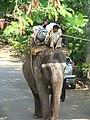 Elephant Ride in Lane G, Koreagaon park, Pune. Pic 1 - panoramio.jpg