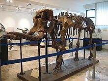 Musei Di Palermo Wikipedia