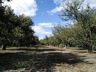 Adelaide Park Lands - Image: Elms Avenue, Park 17, Adelaide Park Lands