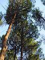 En bici por el parque forestal de entrevías (7).jpg