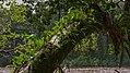 Epiphyte (18167469485).jpg