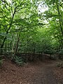 Epping Forest 20170727 111741 (49374982767).jpg