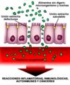 Esquema permeabilidad intestinal aumentada.png
