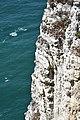 Etretat falaise4.jpg