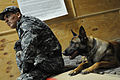 Every dog has its day, including military working dogs DVIDS305578.jpg